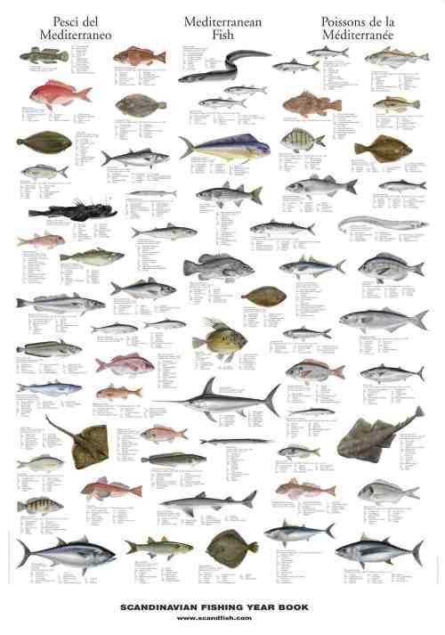 Types of edible fish for Types of edible fish