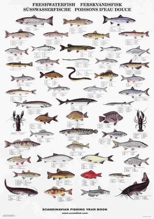 Fish species posters la tene maps for Florida freshwater fish species