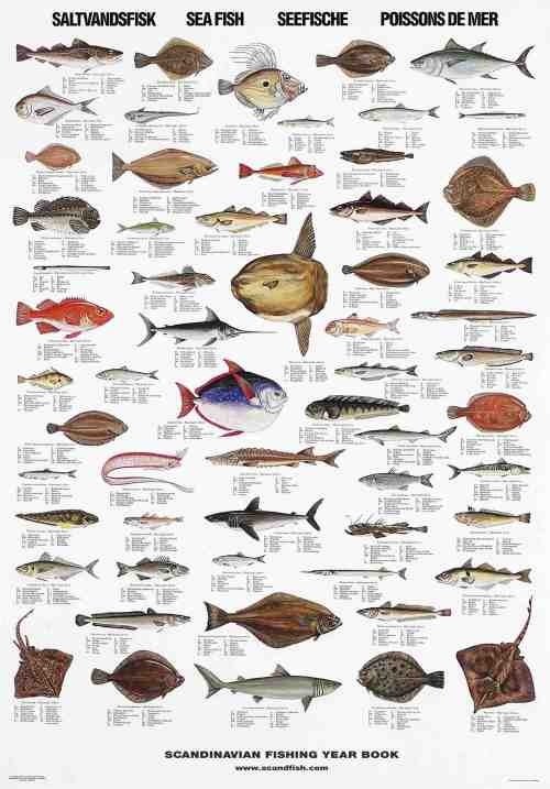 Fish species posters la tene maps for Types of edible fish