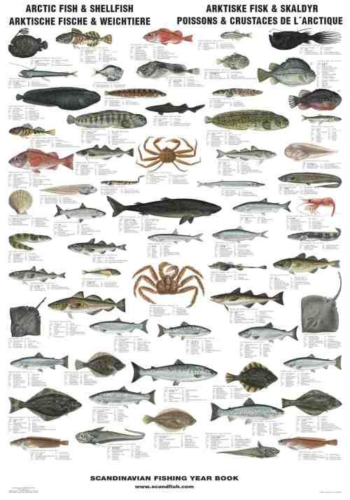 La tene maps arctic fish and shellfish for Types of fish in alaska