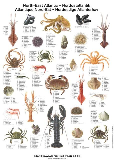 Mini Fish Species Posters Archives La Tene Maps