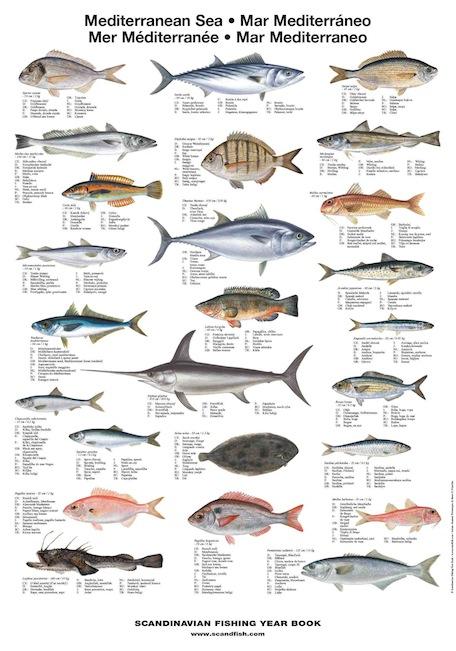 Mediterranean sea fish la tene maps for Types of saltwater fish to eat