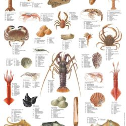 Mini Fish Species Posters