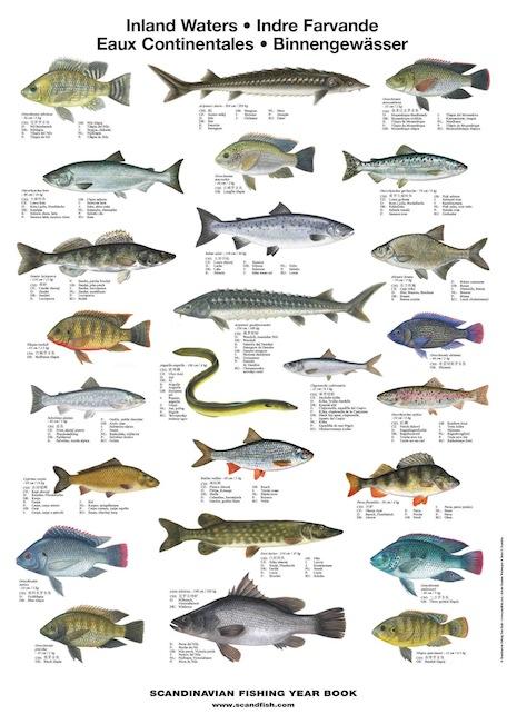 Mediterranean sea fish la tene maps for Maine freshwater fish