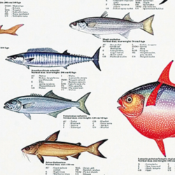 Fish Species Posters